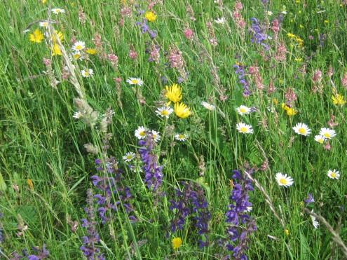 Blumenbunte Wiese auf der Schwäbischen Alb