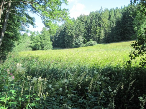 Im Naturschutzgebiet Wiesen bei der Menzlesmühle