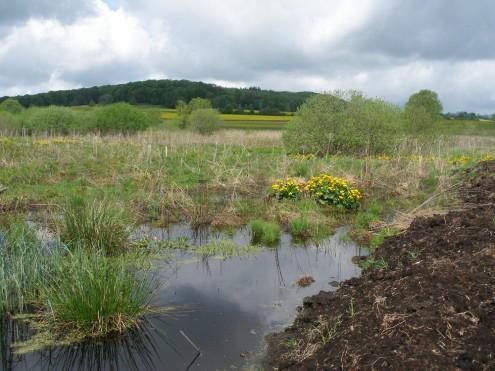 Wiedervernässungsflächen im Naturschutzgebiet Schopflocher Moor