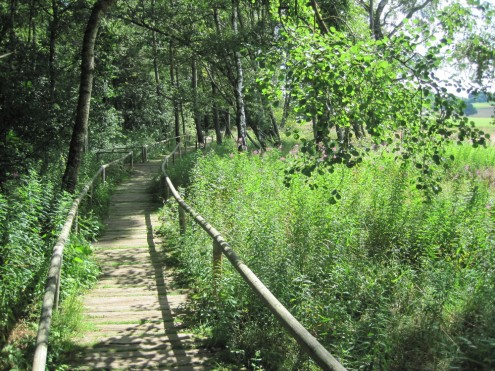 Schwellenweg durch das Naturschutzgebiet Schopflocher Moor