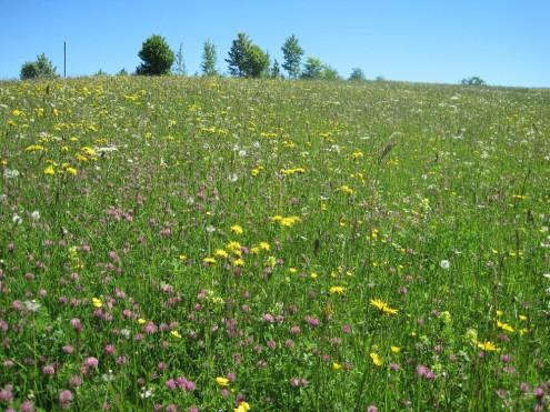 Blumenwiesen bei St. Johann-Ohnastetetten, Kleiner Bühl