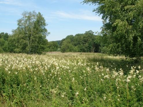 Im Naturschutzgebiet Schopflocher Moor
