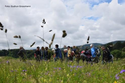 Blumenwiese, Foto: Gudrun Grossmann