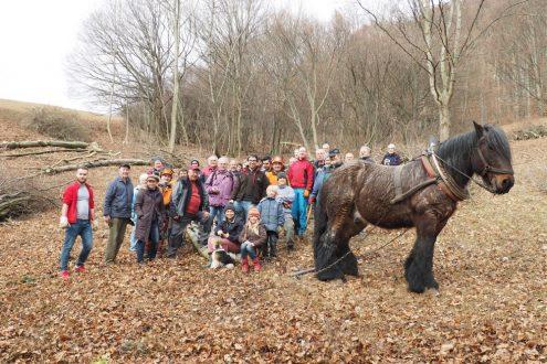 Foto: Katharina Heine, Gruppenfoto mit Rückepferd von Landwirt Notheis