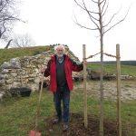 Werner Breuninger neben seiner frisch gepflanzten Linde, Foto: M. Rau